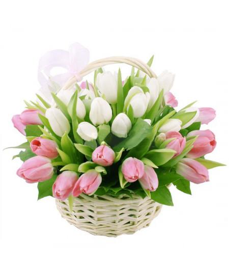 Корзина из 49-ти бело-розовых тюльпанов высшего сорта