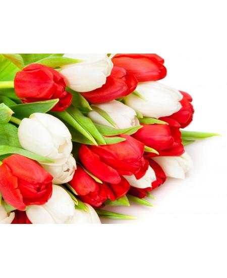 """Букет из 19-ти красно-белых тюльпанов сорта """"экстра"""""""