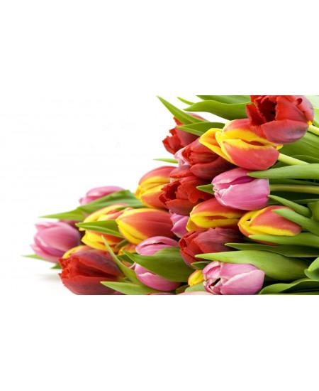 Тюльпаны оптом - высший сорт.